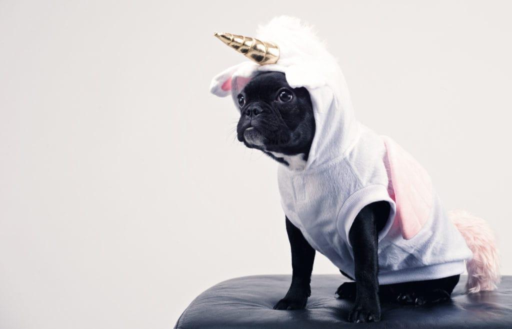 pets safe on halloween