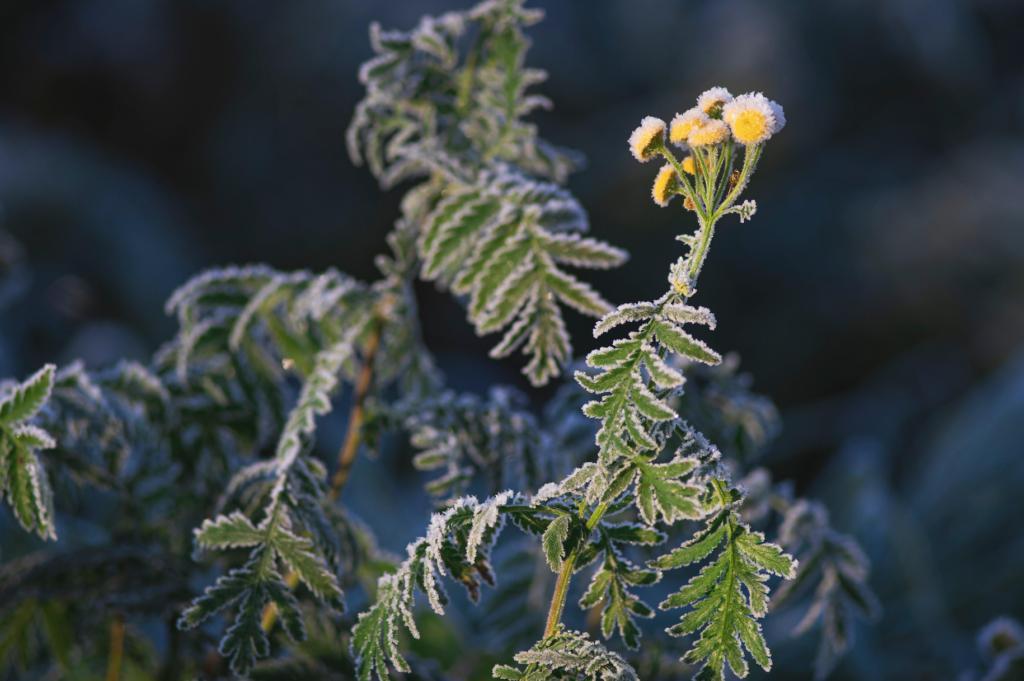 winter-proof gardens